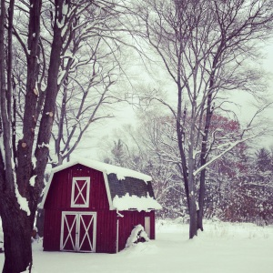 Day Twenty-Six: Our new backyard! What a cute little red barn! #newhouse#backyard#redbarn#winter